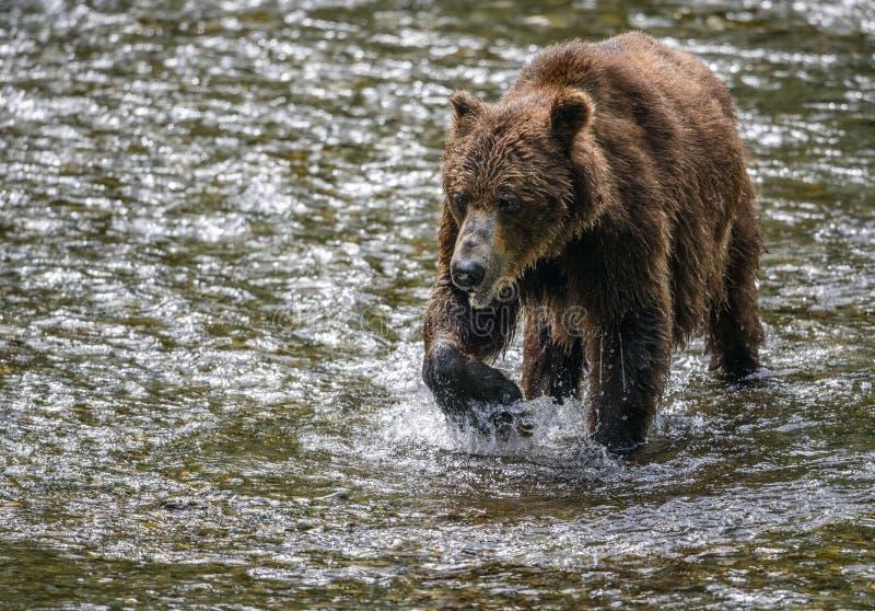 Старый конец-вверх медведя стоковые фотографии rf