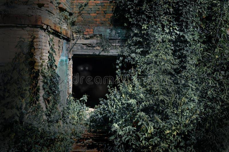 Старый, который сгорели дом перерастанный с заводами в залитой лунным светом ноче ужас темные глаза стоковое изображение