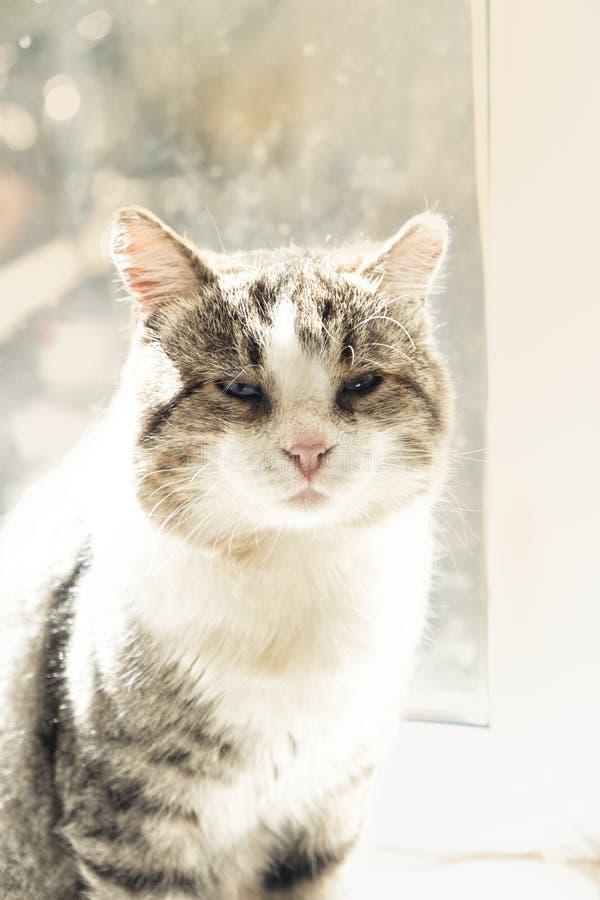 Старый кот на окне сидя на клетке окна очень хотя быть снаружи стоковое фото
