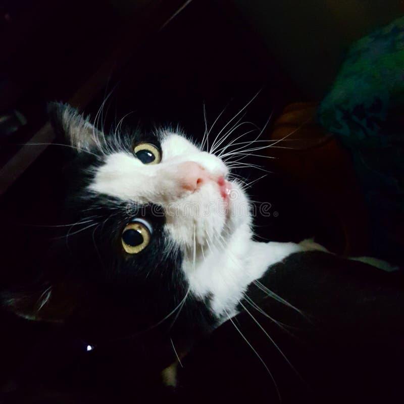Старый кот смотря назад стоковая фотография