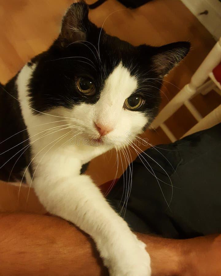 Старый кот хочет быть petted стоковое изображение rf
