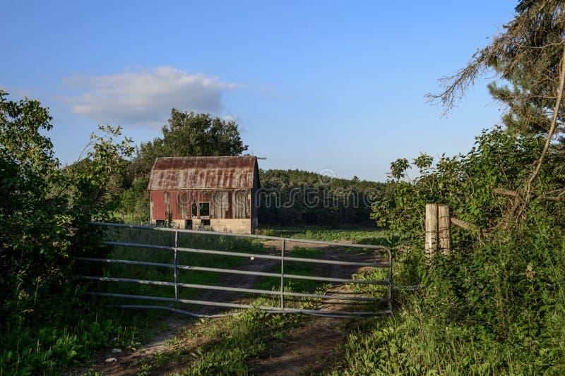 Старый красный амбар на зеленом поле фермеров стоковые фото