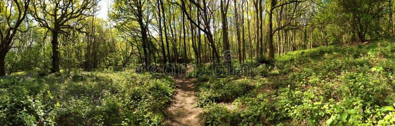 Старый лес луга стоковые фотографии rf