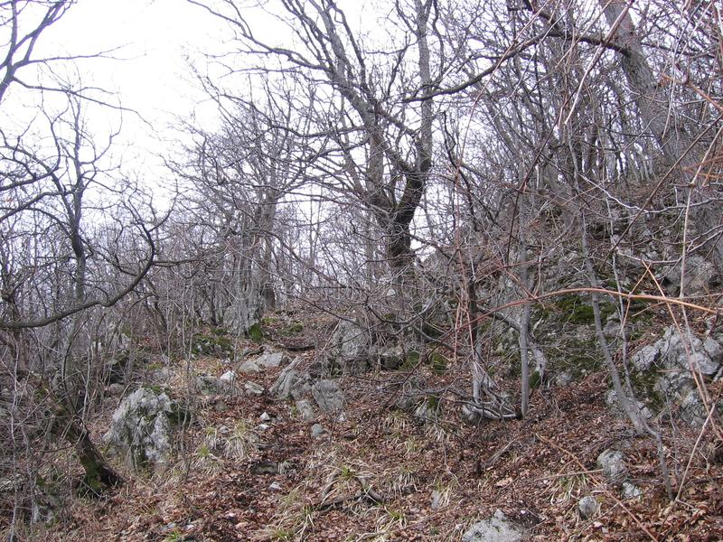 Старый лес около Grza стоковое фото