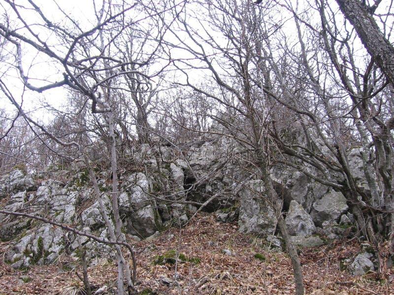 Старый лес около Grza стоковые изображения