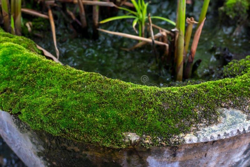 Старый мох покрыл цветочный горшок стоковое фото