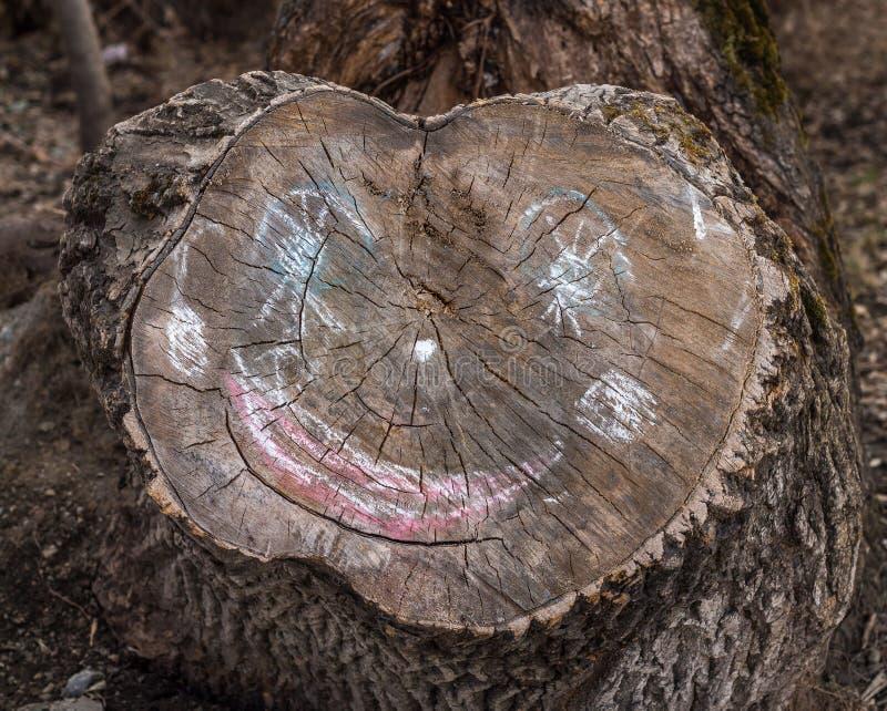Старый отрезок хобота упаденного дерева с меловой стороной на ей стоковые фото