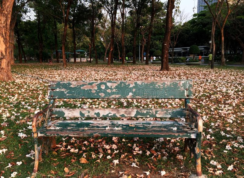 Старый одиночный длинный стул с розовым падением цветков покрыл землю стоковое фото rf