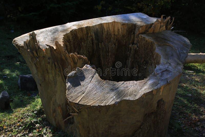 Старый пень отрезанного дерева стоковые фотографии rf