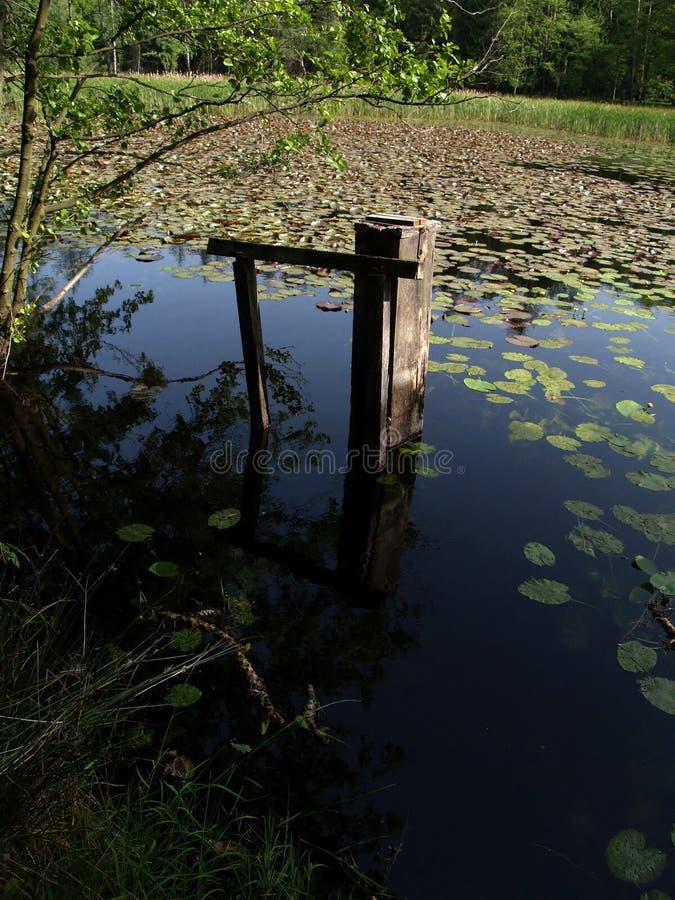 Старый перерастанный пруд стоковая фотография