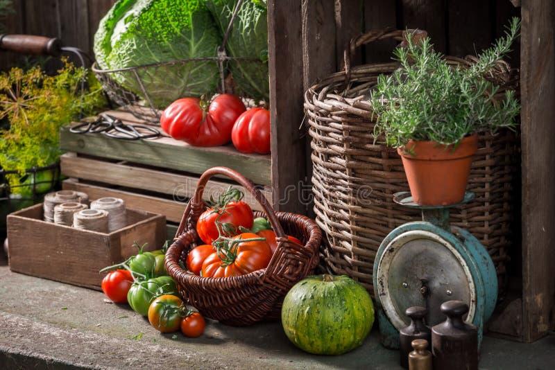 Старый погреб с сжатыми овощами и плодоовощами стоковое изображение rf