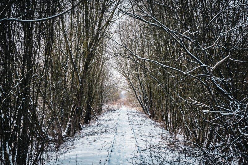Старый покинутый железнодорожный малый тоннель дерева в зиме стоковое изображение rf