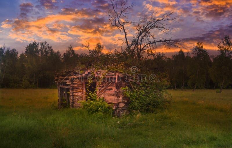 Старый получившийся отказ сломленный амбар на крае леса с высокорослыми зеленой травой и полевыми цветками на заходе солнца Введе стоковое фото rf