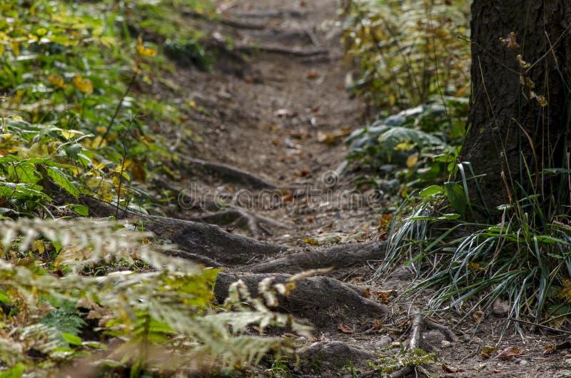 Старый путь леса среди вегетации горы стоковые фотографии rf