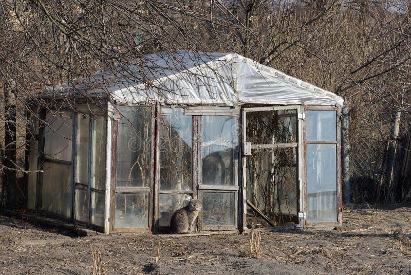 Старый серый стеклянный парник стоит снаружи в сухой растительности стоковое изображение rf