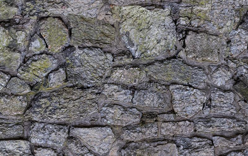 Старый серый цвет выдержал стена сада предусматриванная с картиной утесов мха несимметричной стоковое фото rf