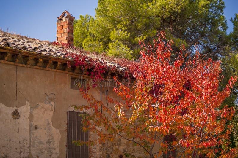 Старый сельский дом и яркое красное дерево в Тоскане стоковые изображения rf