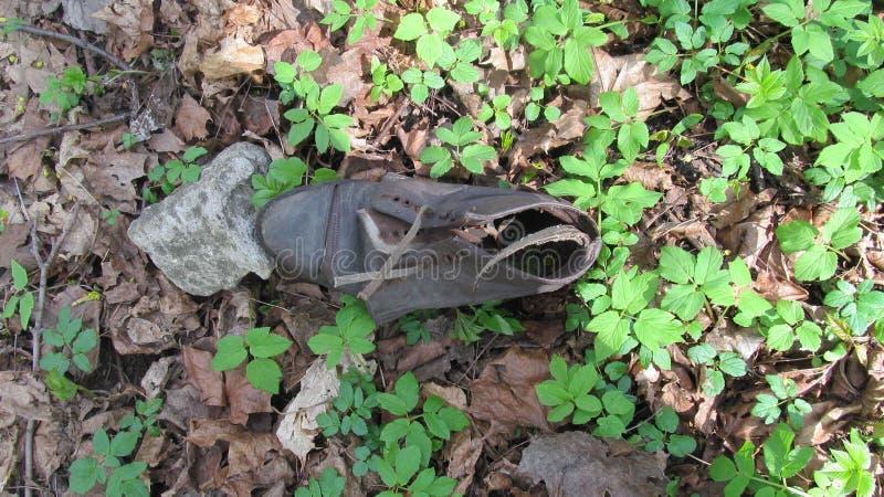 Старый сорванный ботинок в древесинах стоковое фото rf