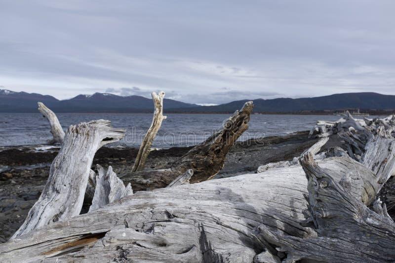 Старый ствол дерева на скалистом пляже стоковые фотографии rf