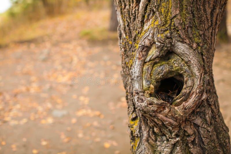 Старый ствол дерева с неубедительной текстурой коры, горизонтальной естественной предпосылкой с космосом экземпляра, концом вверх стоковое изображение rf