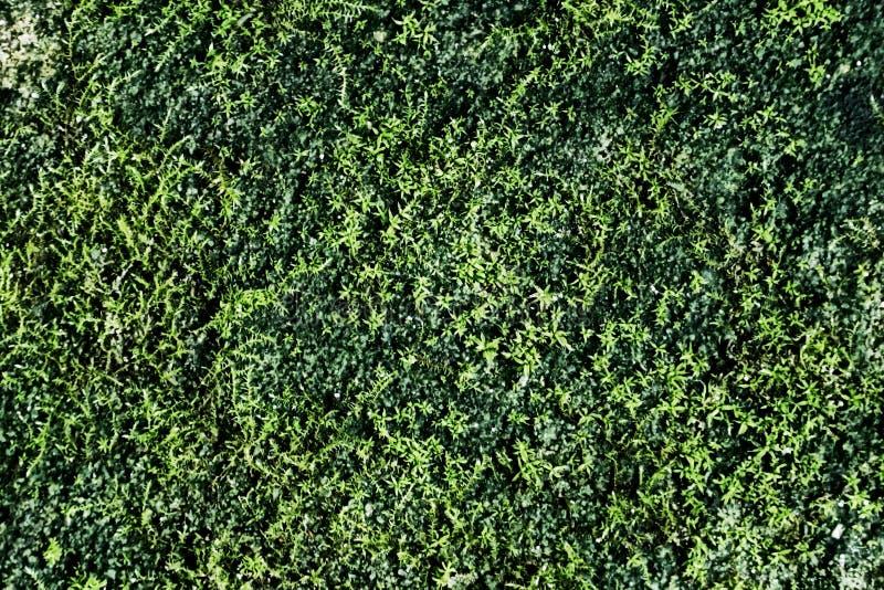 Старый темный камень перерастет зеленым мхом стоковая фотография rf