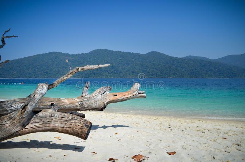 Старый тимберс, сухие листья, точный песок, голубая и зеленая ясная морская вода, гора и голубое небо на пляже в Таиланде стоковое изображение rf