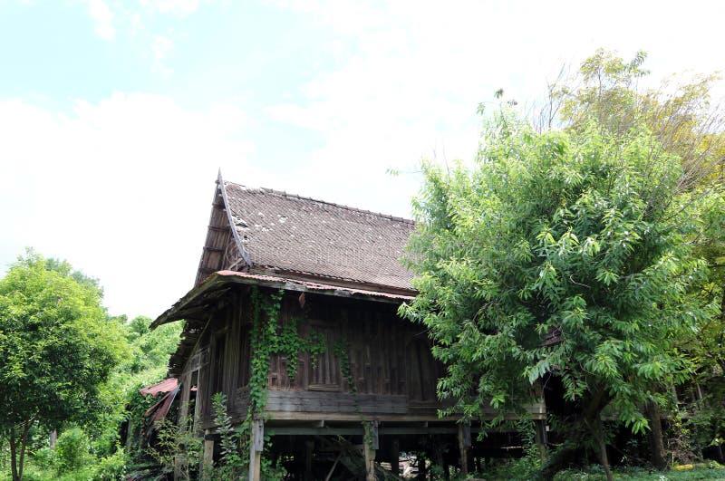 Старый традиционный тайский дом с деревом подъем вдоль стены, и большое дерево вокруг дома стоковые фотографии rf