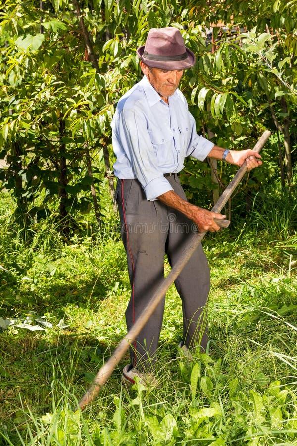 Старый фермер используя косу для того чтобы накосить траву стоковое фото