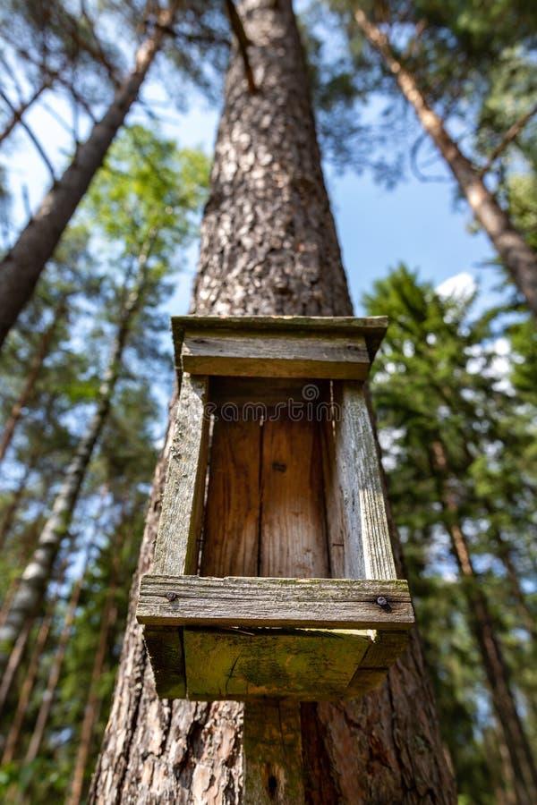 Старый фидер птицы лежа на соре леса Деревянный birdhouse стоковое изображение rf