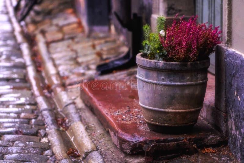 Старый цветочный горшок улицы, городок стоковое изображение rf