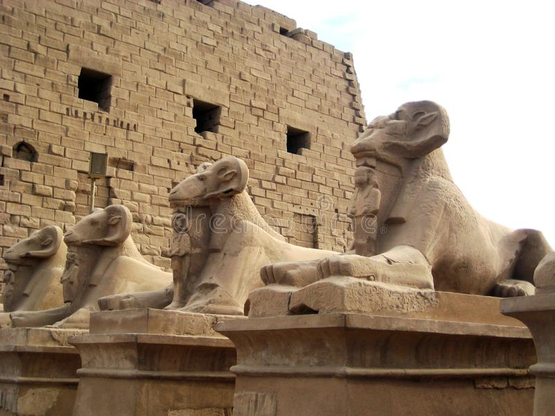 Статуи сфинкса с головой штосселя стоковое изображение