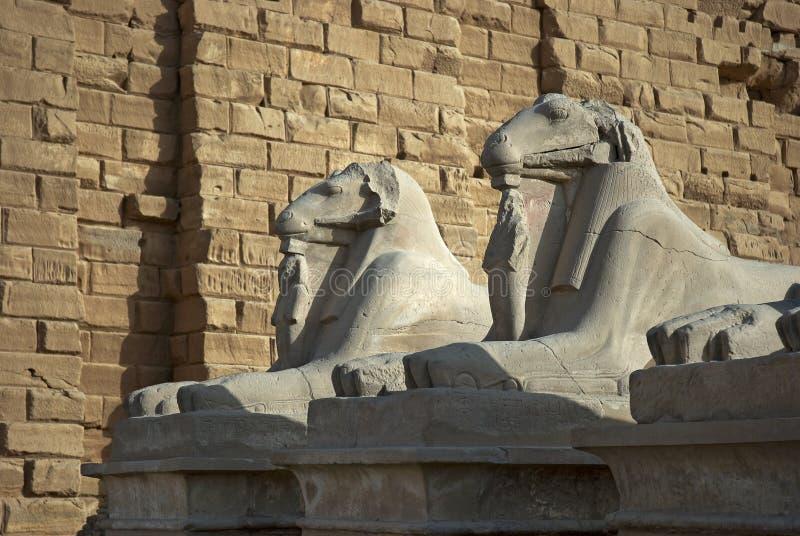 Статуи штосселей на виске Karnak стоковые изображения