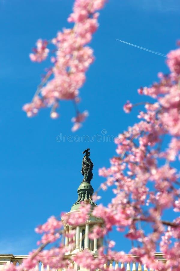 Статуя свободы na górze здания капитолия Соединенных Штатов в DC Вашингтона стоковое фото
