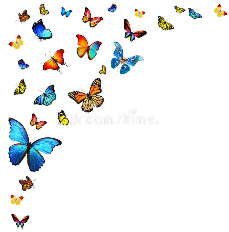 Стая бабочек иллюстрация штока
