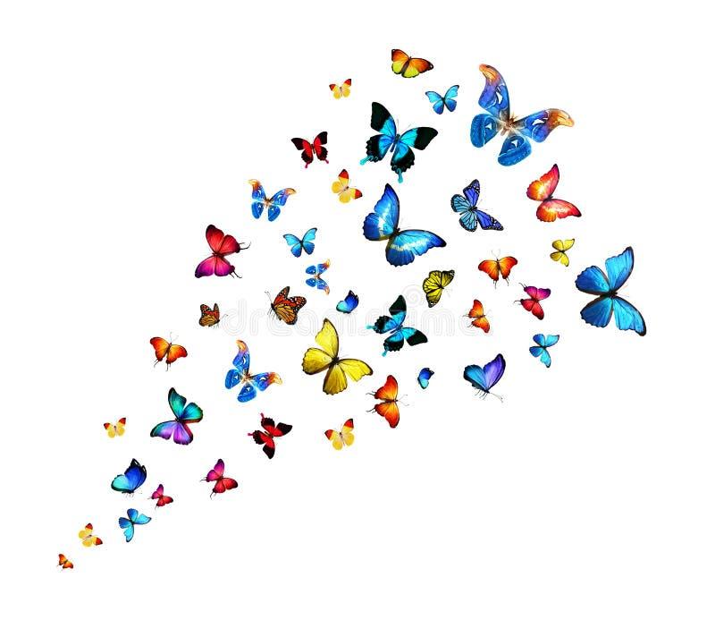 Стая бабочек иллюстрация вектора