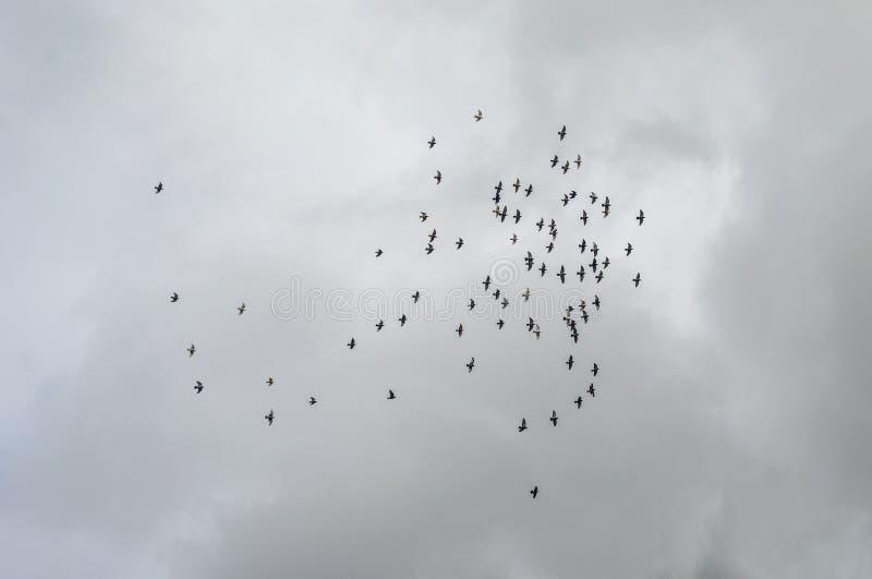 Стая летать птиц стоковые фото