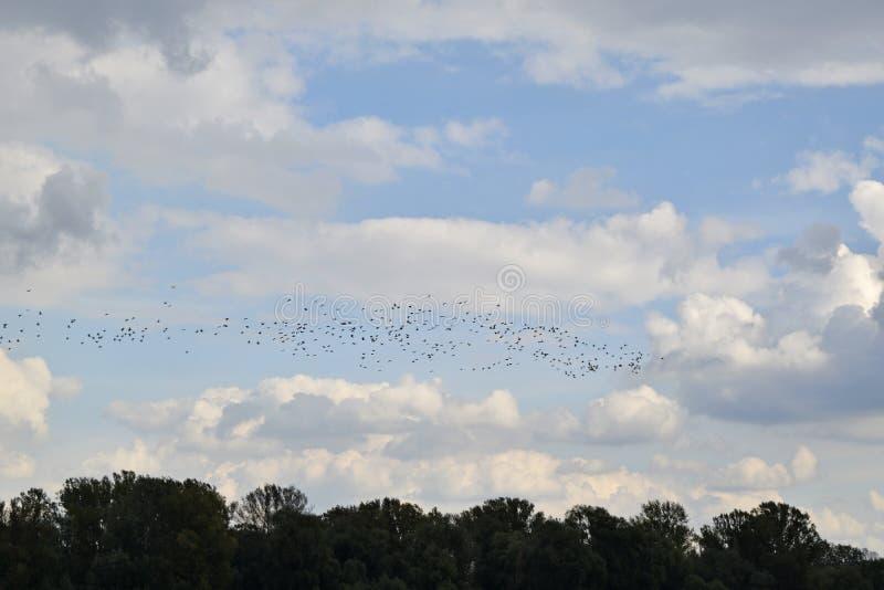 Стая птиц в небе стоковая фотография