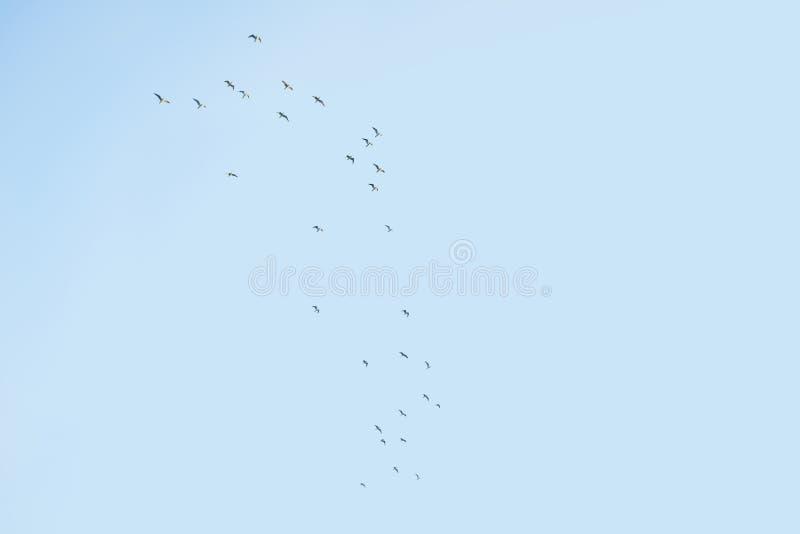 Стая птиц в небе бесплатная иллюстрация