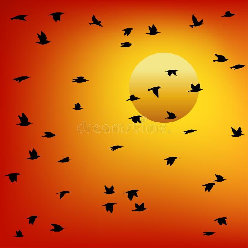 Стая птиц на заходе солнца Цветастый вектор иллюстрация вектора