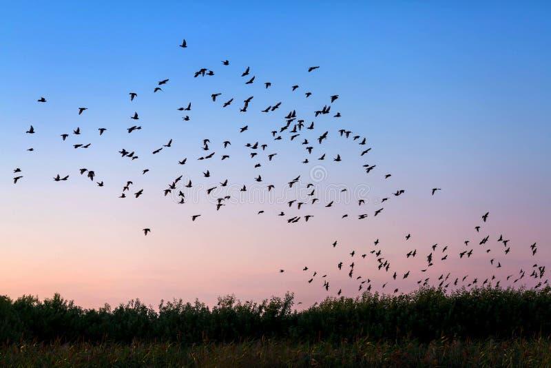 Стая птиц стоковое изображение rf