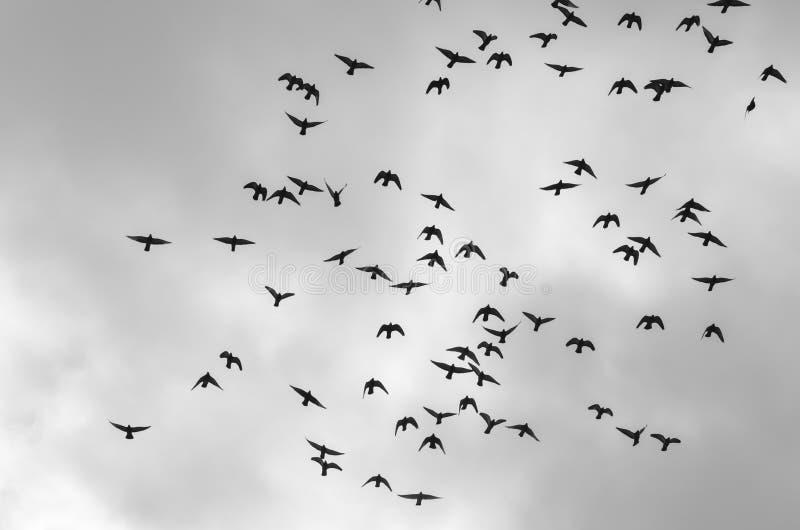 Стая птиц стоковое изображение