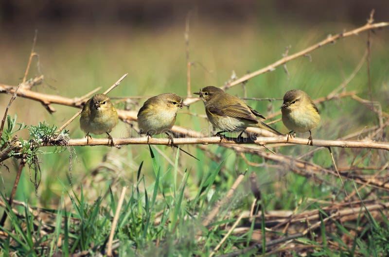 Стая птиц стоковая фотография