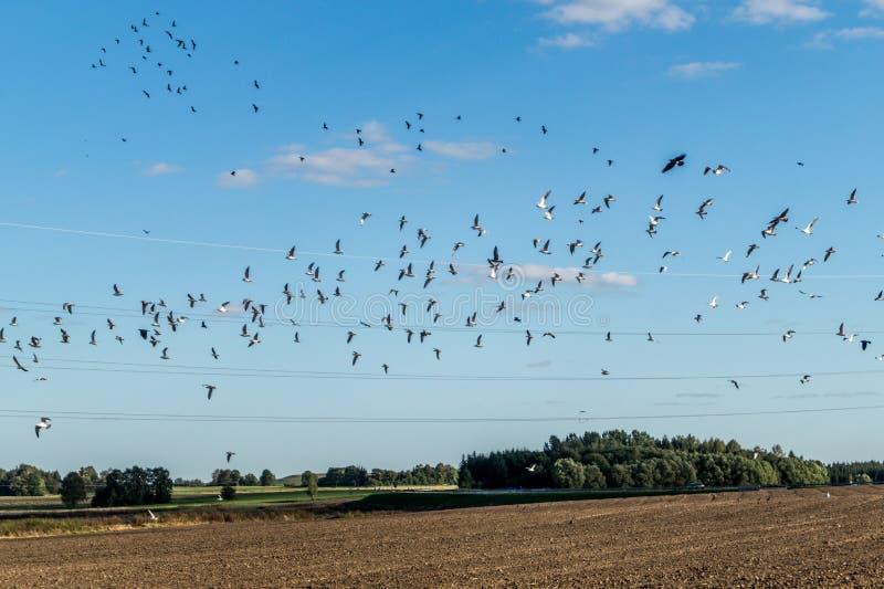 Стая птиц стоковые изображения