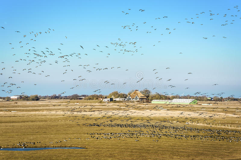 Ландшафт с домом и птицами стоковое изображение rf