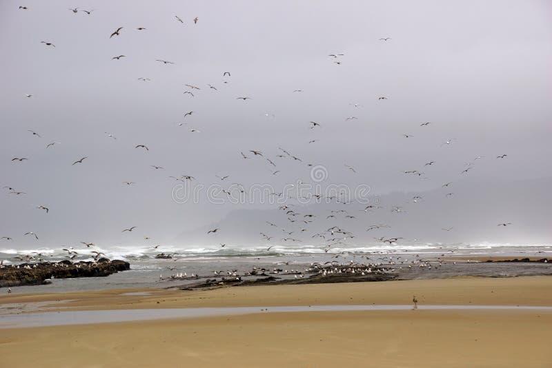 Стада чайок летая вдоль прибрежного песка приставают к берегу стоковая фотография rf