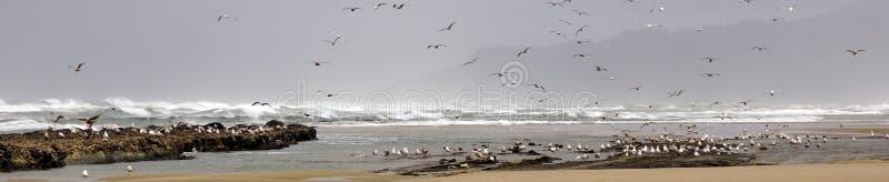 Стада чайок летая вдоль прибрежного песка приставают к берегу стоковое фото