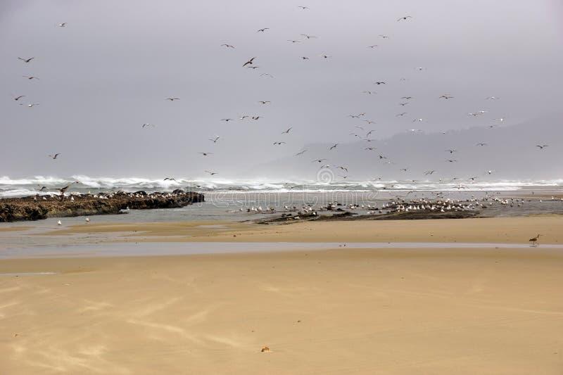 Стада чайок летая вдоль прибрежного песка приставают к берегу стоковое изображение