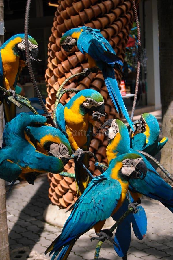 Стадо попугаев стоковая фотография rf