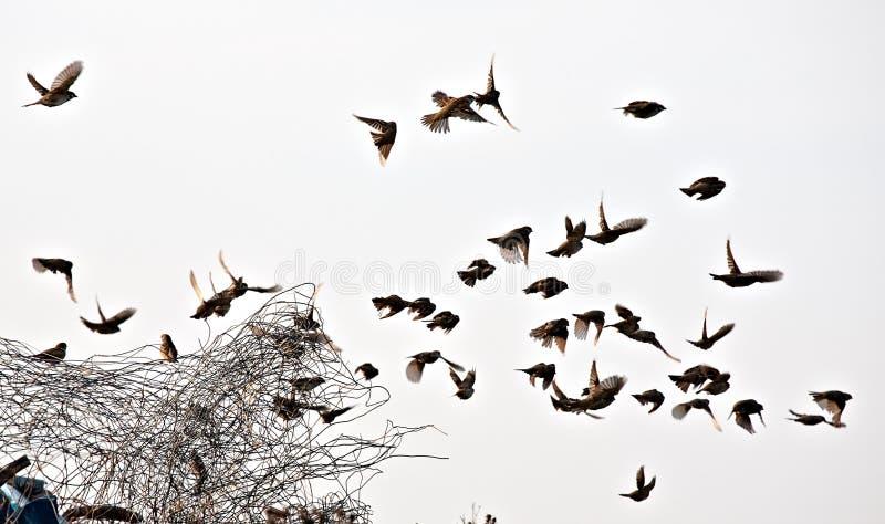Стадо птицы стоковое изображение rf