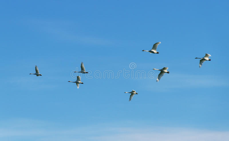 Стадо птиц в небе стоковая фотография